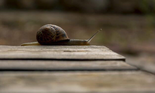 Jak bardzo instalacja wtyczek i motywu wpływa na szybkość WordPress?
